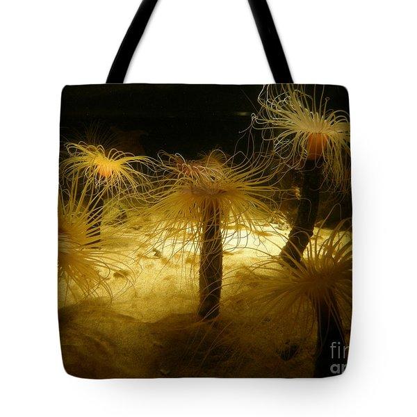 Gold Sea Anemones Tote Bag by Bev Conover