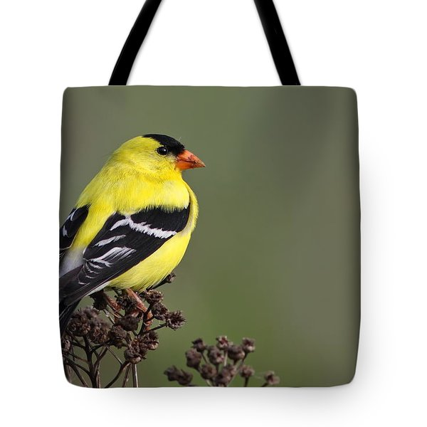 Golden Bird Tote Bag by Mircea Costina Photography