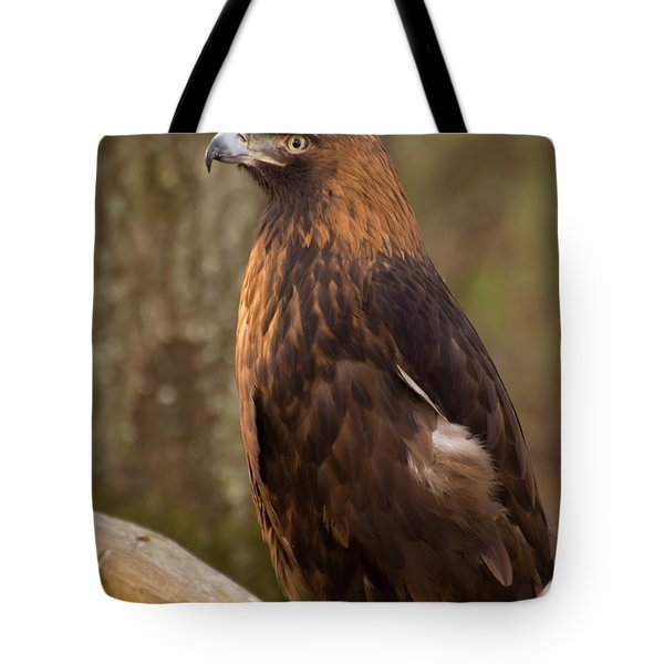 Golden Eagle Resting On A Branch Tote Bag by Chris Flees