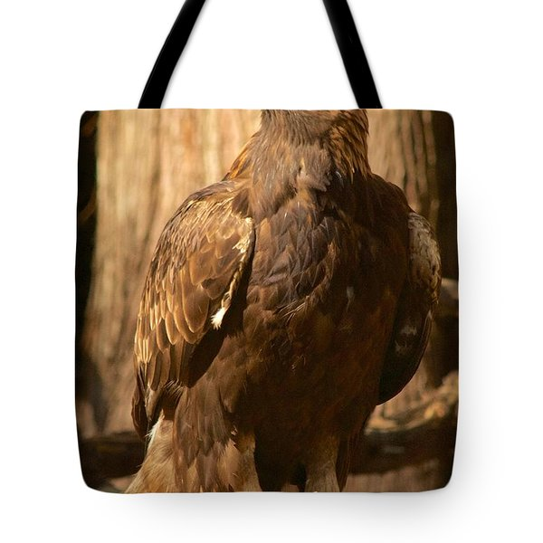 Golden Eagle Tote Bag by Sean Griffin