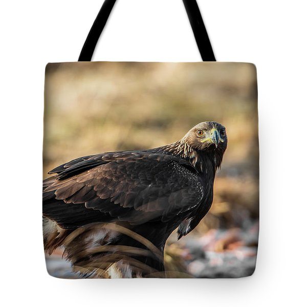 Golden Eagle's Glance Tote Bag by Torbjorn Swenelius