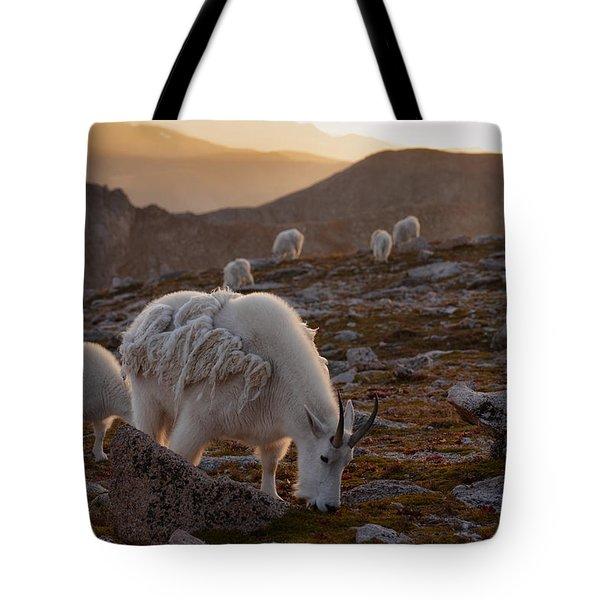 Golden Goat Herd Tote Bag