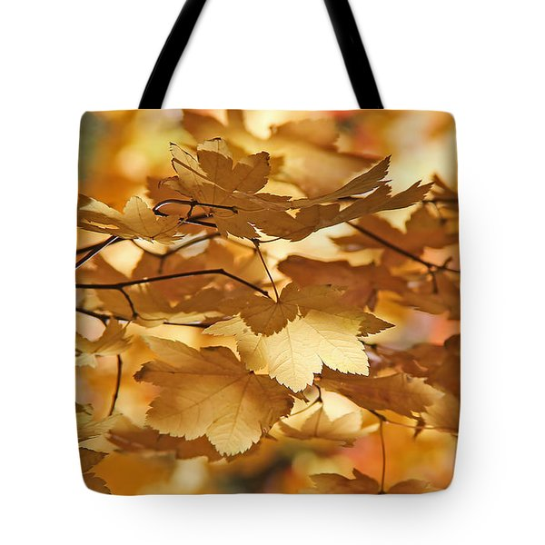 Golden Light Autumn Maple Leaves Tote Bag by Jennie Marie Schell