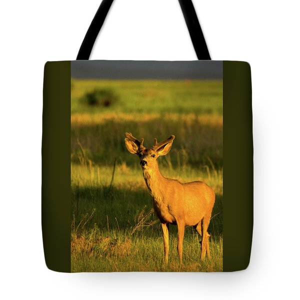 Golden Light Buck II Tote Bag