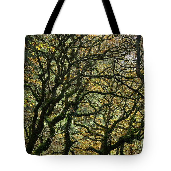 Golden Oaks Tote Bag