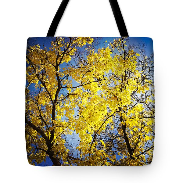 Golden October Tree In Fall Tote Bag by Matthias Hauser