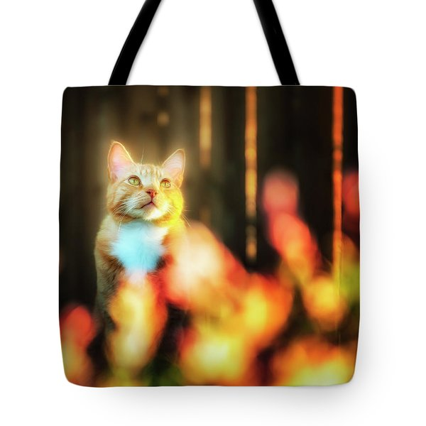 Golden Orange Tabby Tote Bag
