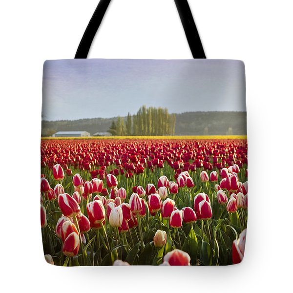 Golden Sunset Across The Tulip Fields Tote Bag by Maria Janicki