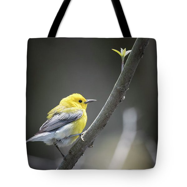Golden Swamp Warbler Tote Bag by Gary Hall