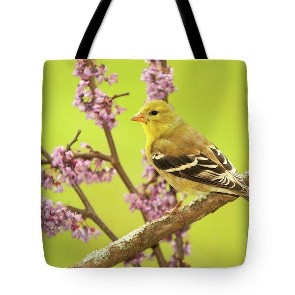Goldfinch Among Redbud Tote Bag