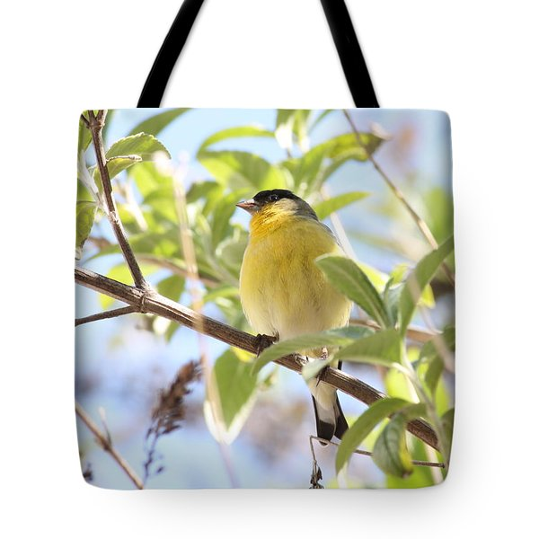 Goldfinch In Spring Tree Tote Bag by Carol Groenen