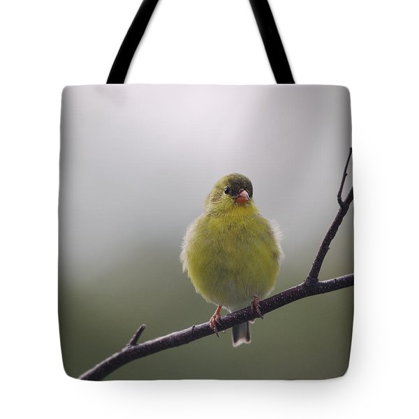 Tote Bag featuring the photograph Goldfinch Puffball by Susan Capuano
