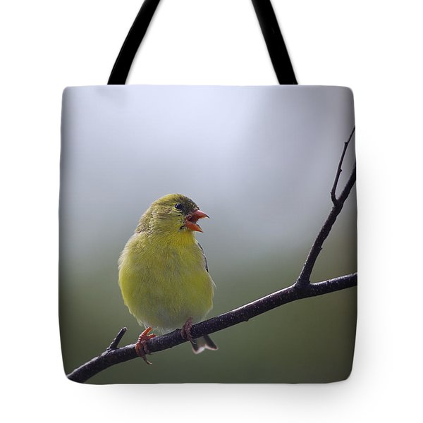 Tote Bag featuring the photograph Goldfinch Song by Susan Capuano