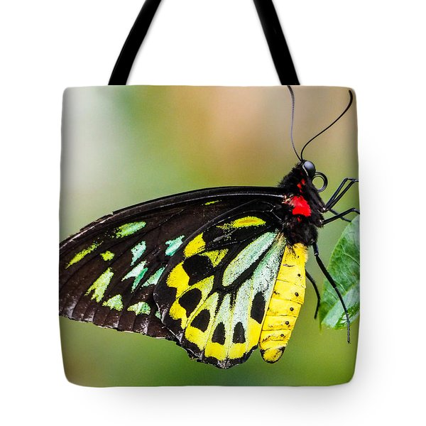 Goliath Birdwing Butterfly Tote Bag