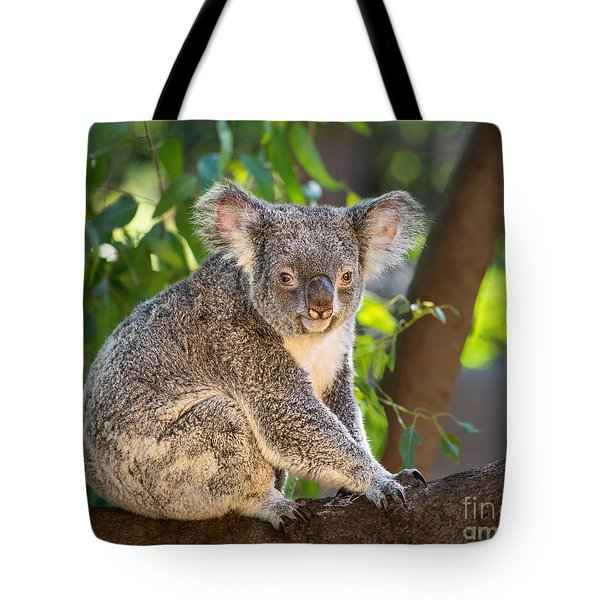 Good Morning Koala Tote Bag by Jamie Pham