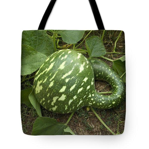 Gooseneck Gourd Tote Bag