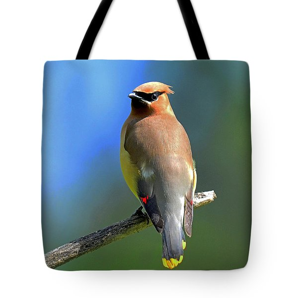 Tote Bag featuring the photograph Gorgeous Cedar Waxwing by Rodney Campbell
