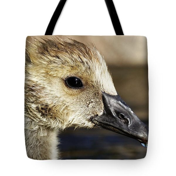 Tote Bag featuring the photograph Gosling - Growing Up by Sue Harper