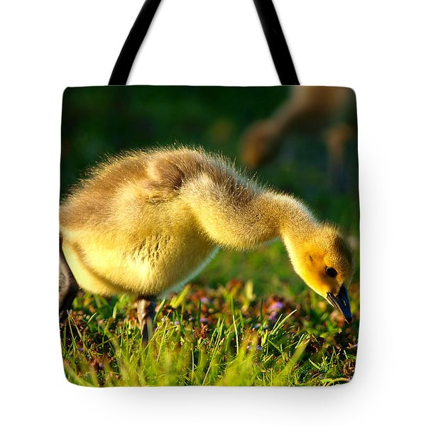Gosling In Spring Tote Bag by Paul Ge