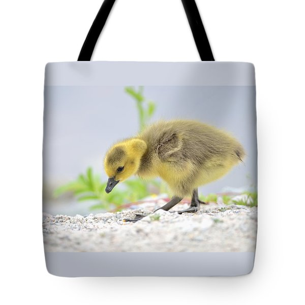 Tote Bag featuring the photograph Gosling by Kathy King