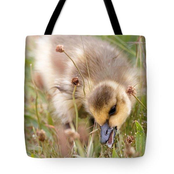 Gosling Nibble Tote Bag