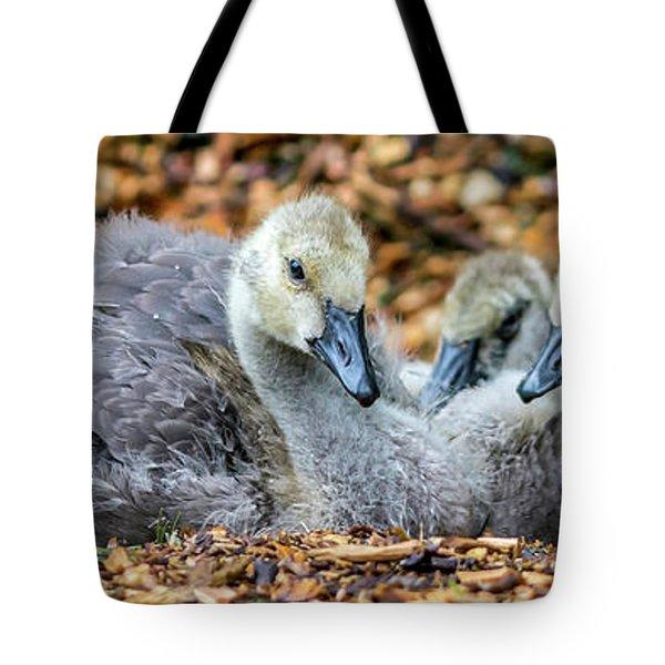 Goslings Tote Bag by Irwin Seidman