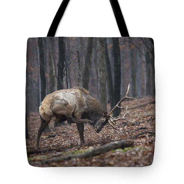 Tote Bag featuring the photograph Got A Scratch by Andrea Silies