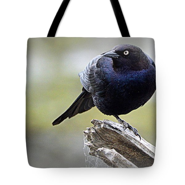 Grackle Resting Tote Bag