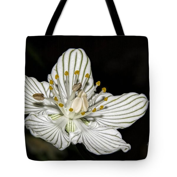 Tote Bag featuring the photograph Grass Of Parnassus by Barbara Bowen