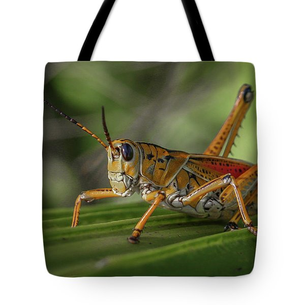 Tote Bag featuring the photograph Grasshopper And Palm Frond by Tom Claud