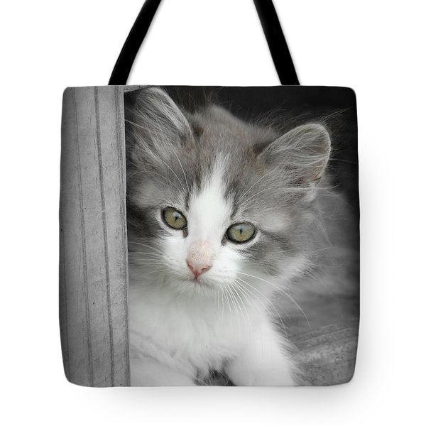 Gray And White Kitten Tote Bag