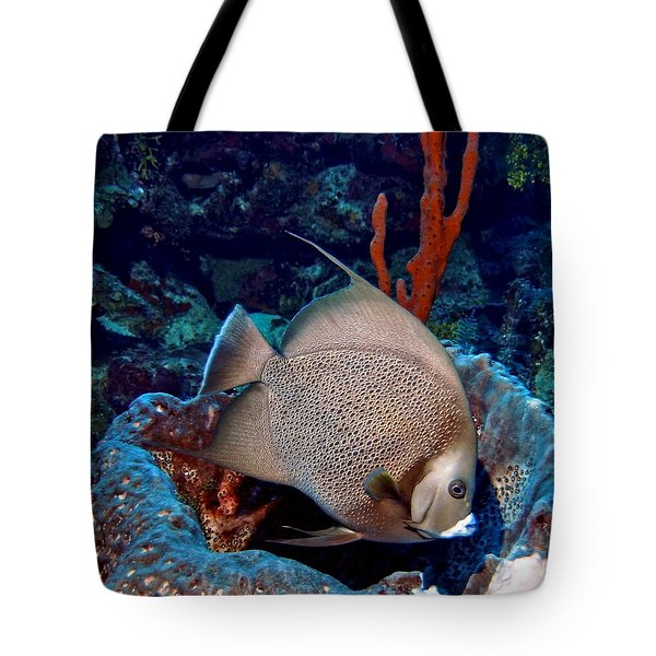 Gray Angel Fish And Sponge Tote Bag