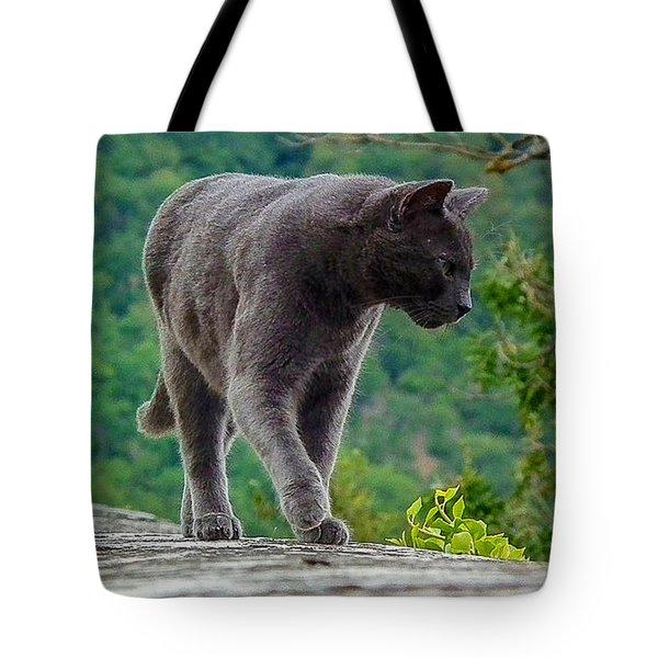 Gray Cat Stalking Tote Bag