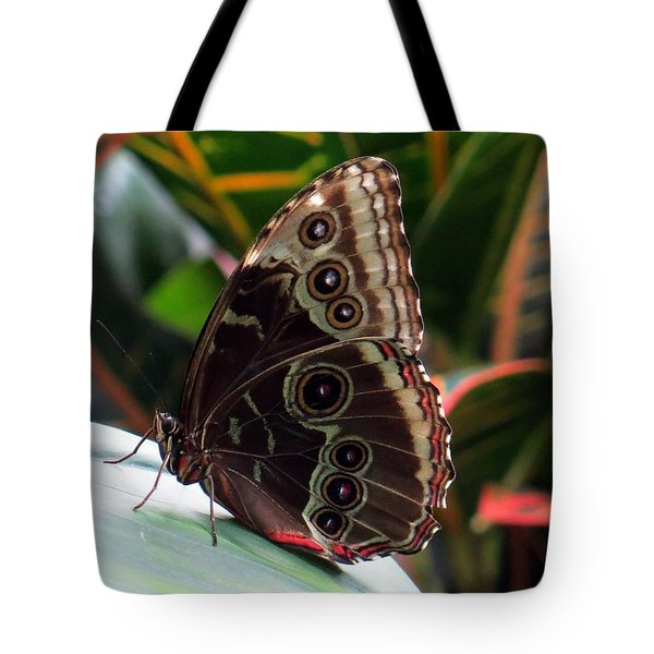 Gray Cracker Butterfly Tote Bag