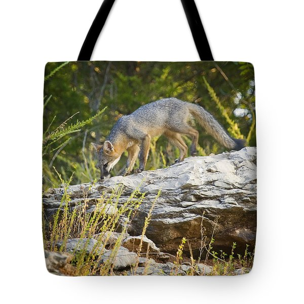 Gray Fox Hunting The Bluff Tote Bag