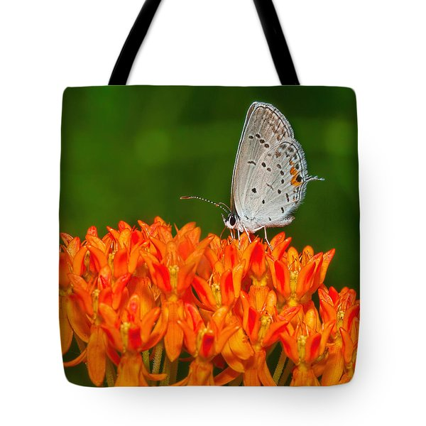 Tote Bag featuring the photograph Gray Hairstreak On Green And Orange 2 by Lara Ellis