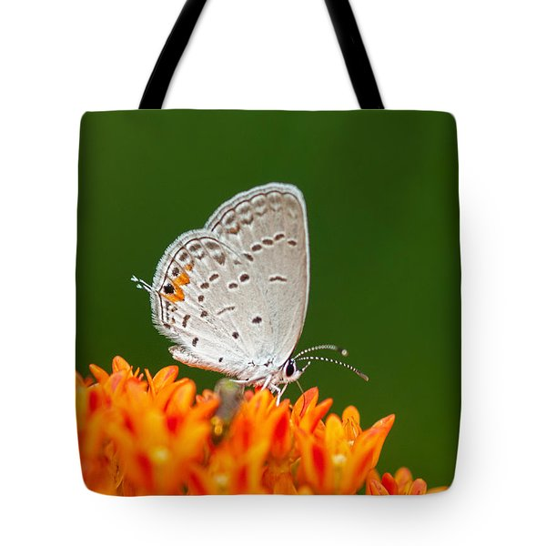 Tote Bag featuring the photograph Gray Hairstreak On Green And Orange by Lara Ellis