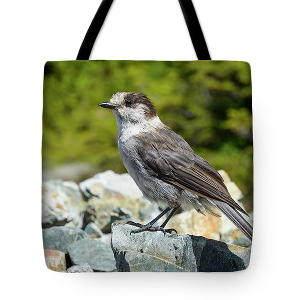 Tote Bag featuring the photograph Gray Jay, Canada's National Bird by Kathy King