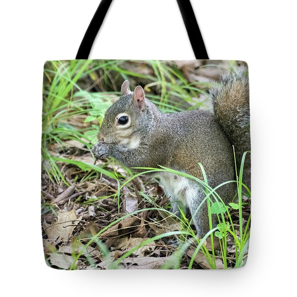 Gray Squirrel Eating Tote Bag