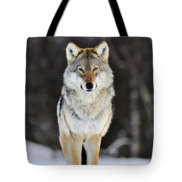 Tote Bag featuring the photograph Gray Wolf In The Snow by Jasper Doest