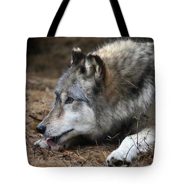 Gray Wolf Tote Bag by Karol Livote