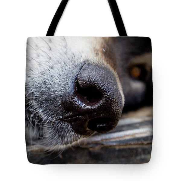 Tote Bag featuring the photograph Gray Wolf Nose by Teri Virbickis