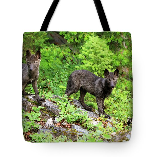 Gray Wolf Pups Tote Bag by Louise Heusinkveld