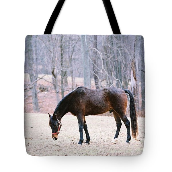Tote Bag featuring the photograph Grazing by Polly Peacock