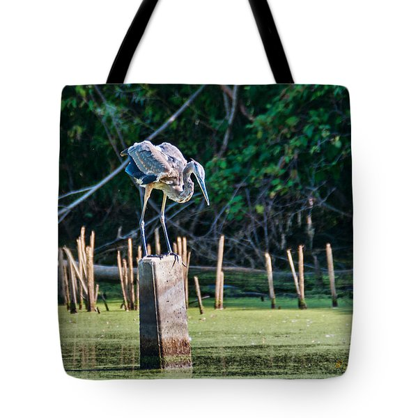 Tote Bag featuring the photograph Great Blue Heron Posed by Edward Peterson