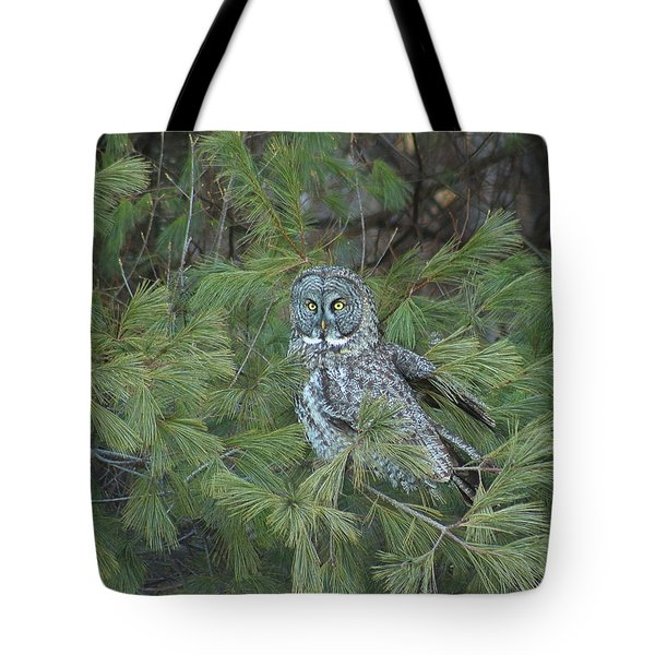 Great Gray Owl In Pine Tree Tote Bag by John Burk