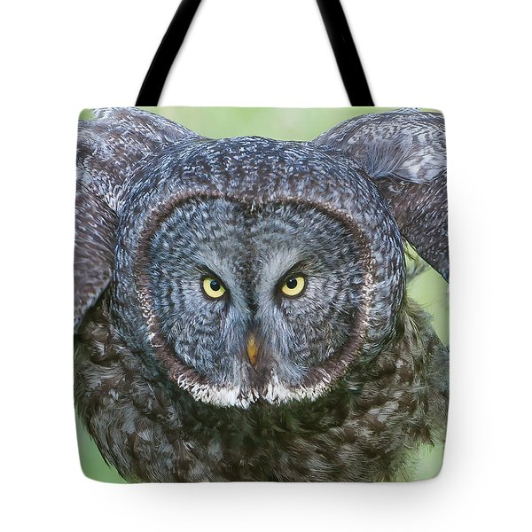 Great Gray Owl Flight Portrait Tote Bag