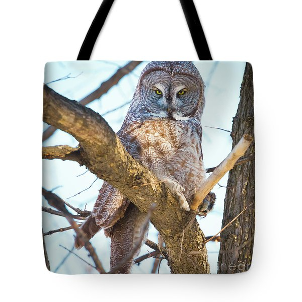 Great Gray Owl Tote Bag by Ricky L Jones