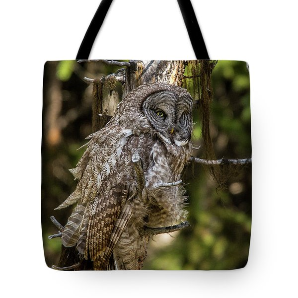 Great Grey Owl In Windy Spring Tote Bag by Yeates Photography
