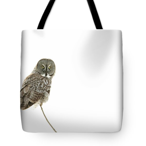 Tote Bag featuring the photograph Great Grey Owl On White by Mircea Costina Photography